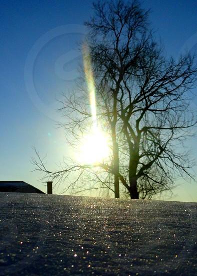 sun shining through tree and glistening on snow photo