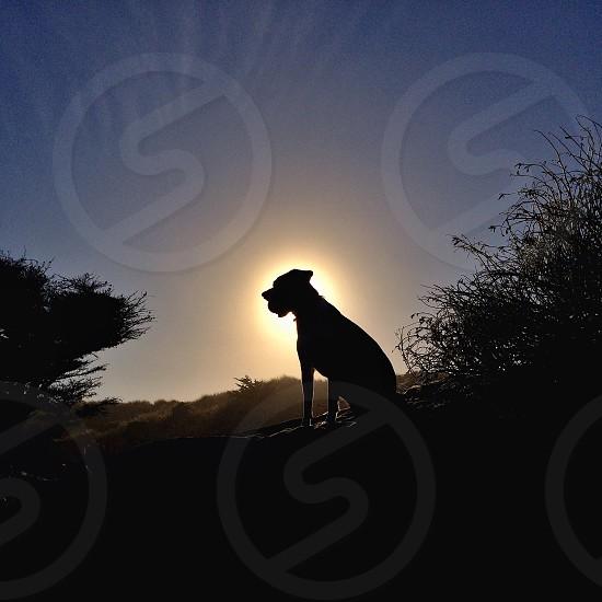 dog silhouette photo