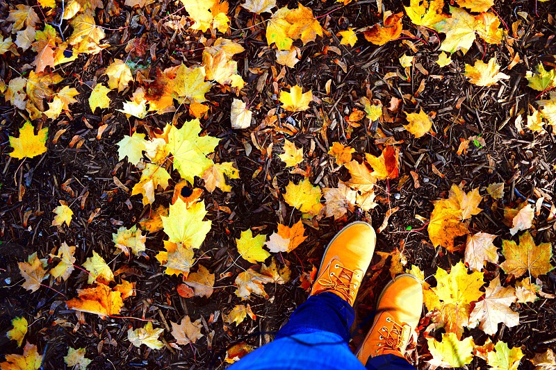 Leaf design happy fall ya'll 🍁🍂🍁 photo