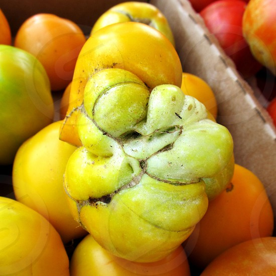 Yellow gnarly heirloom tomato photo