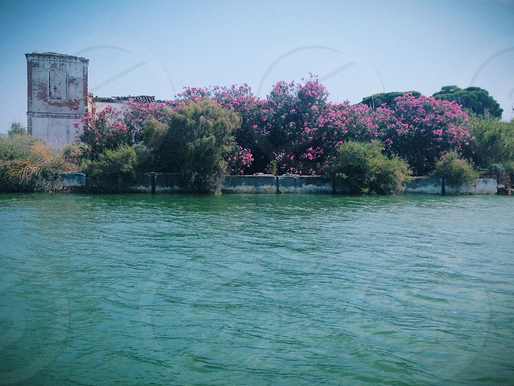 pink-and-green tree line near body of water during daytime photo