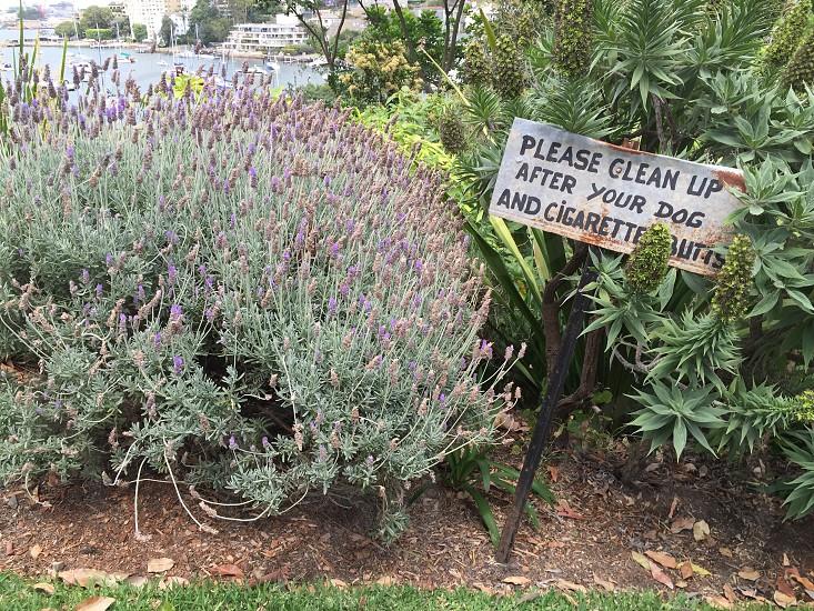 Garden lavender no cigarette butts plant photo
