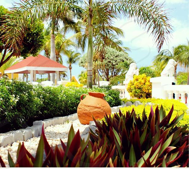 Beautiful tropical landscape  photo