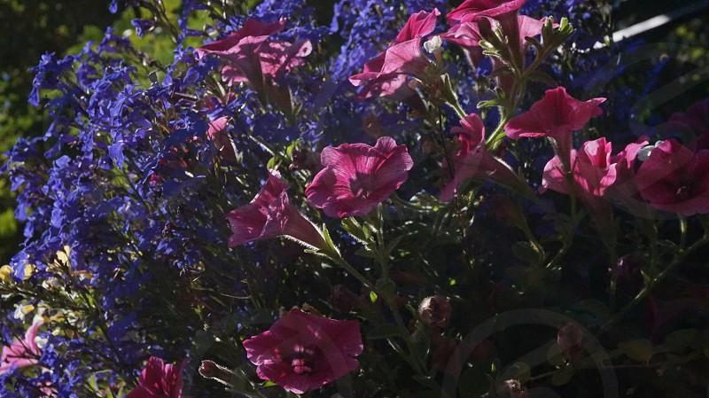 photography of purple and red flowers photo