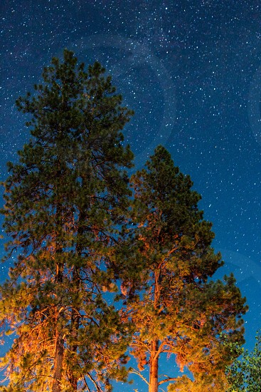 low angle photo of tree under blue skies and stars at nightime photo
