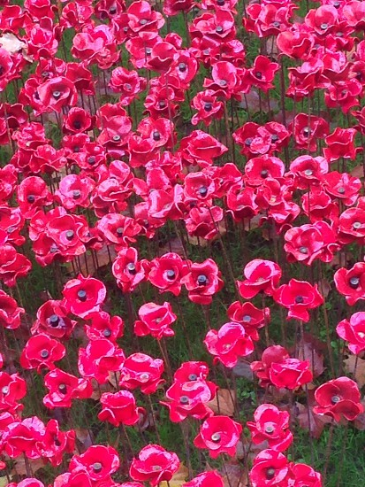 London 2014 war poppy poppies photo