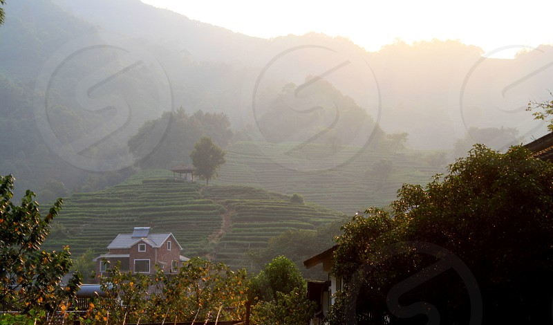 green tall tress with house and foggy mountain photo