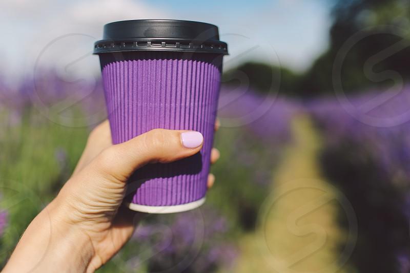 ultra violet coffe cup lavander field hand photo