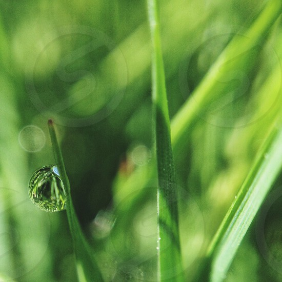 green plant with water drop photo