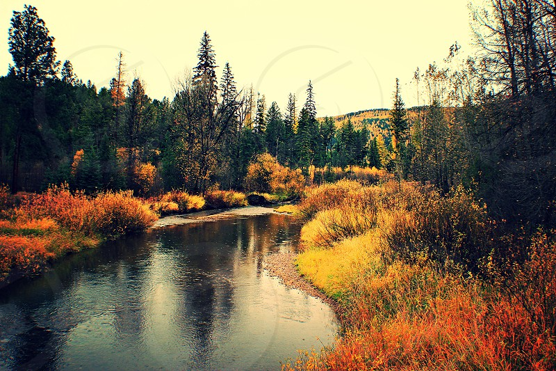 stream near pine trees photo