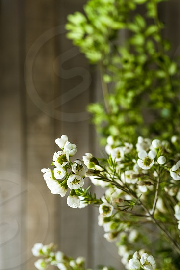 Branches of a blooming plant photo