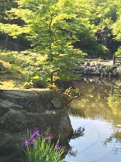 日本庭園(Japanese‐style garden) photo