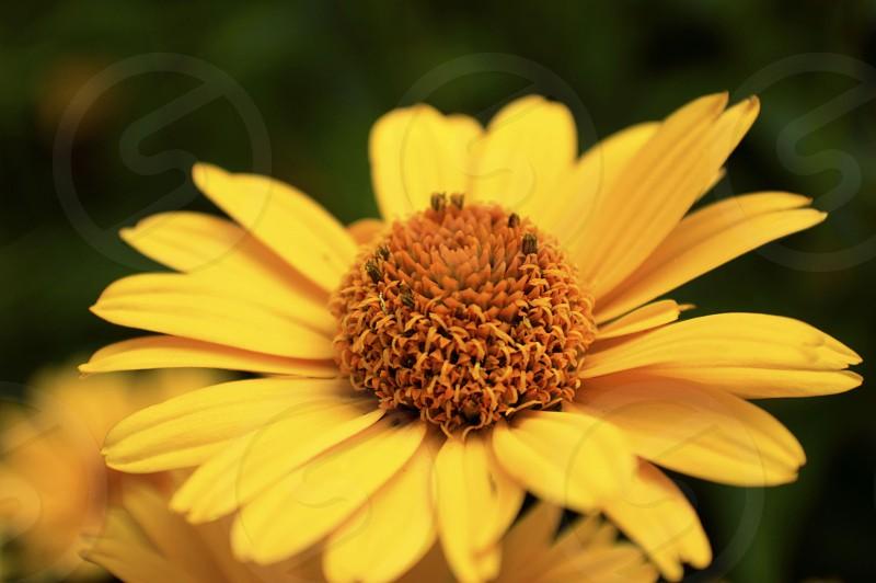 flower 2 photo