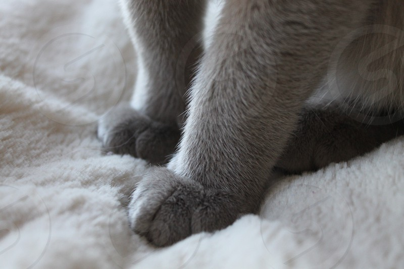 black and gray cat on white textile photo