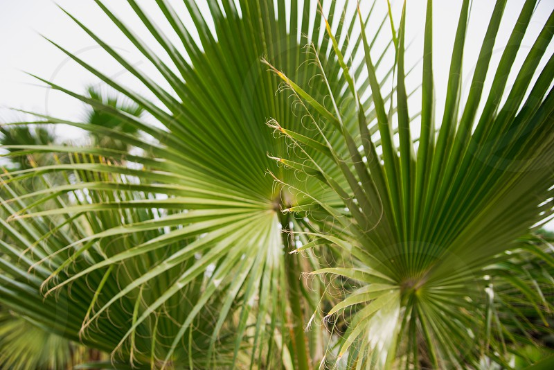 Palm leaves background texture photo