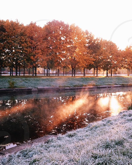 brown autumn trees across river during day photo