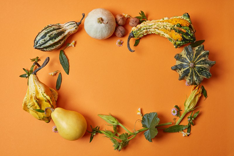 A round frame made of a variety of autumnal pumpkins leaves nuts and flowers on an orange background flat lay photo