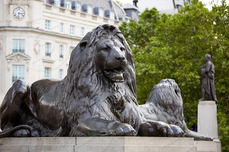 London Trafalgar Square Lion in UK england photo