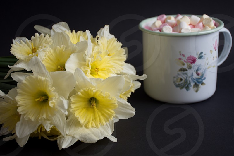 Narcissus and marshmallows on the black background photo