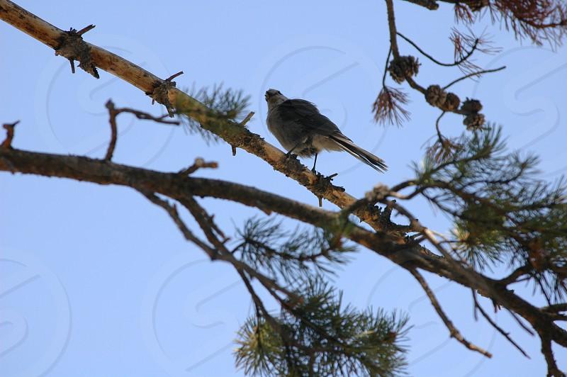 Bird in tree photo