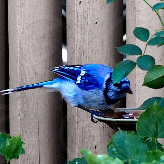 blue and white bird photo