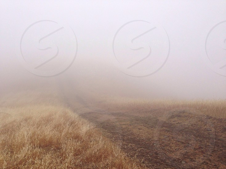 brown dirt road line with brown grass during misty weather photo