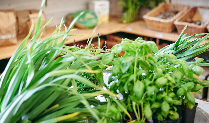 leafy greens photo