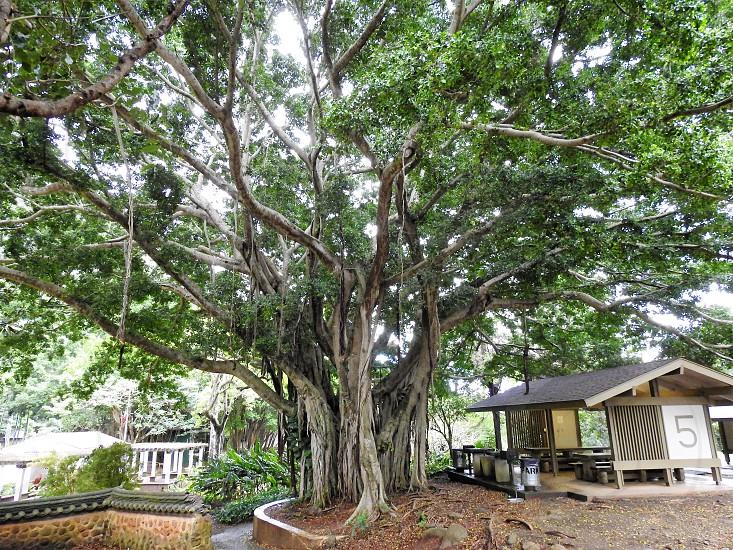 Kepaniwai Park Iao Valley Maui       photo