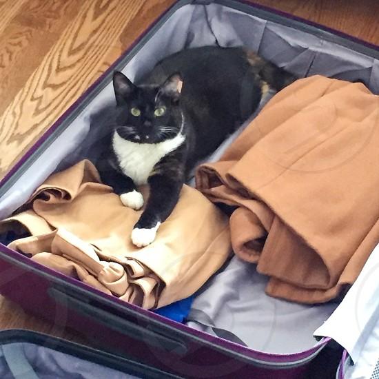travelcattravel luggageluggagesuitcasetravel preparation, photo