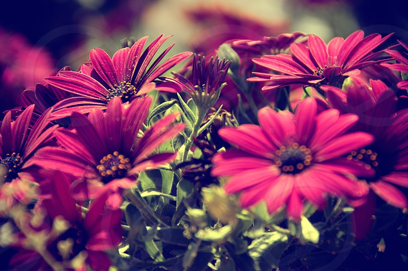 flowers spring bright colours purple pink photo