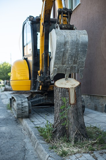 Excavator rooting a tree on the street. Safe nature and construction concept.  photo