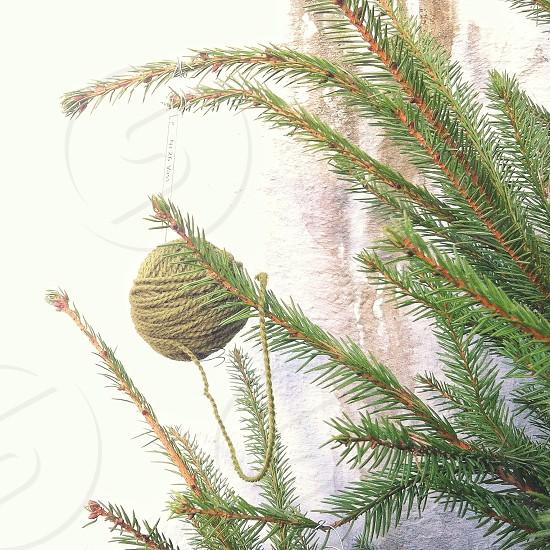 brown yarn on green pine tree photo