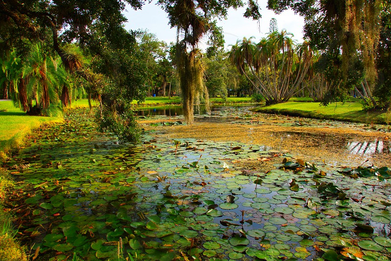 green water lilies in the pond photo
