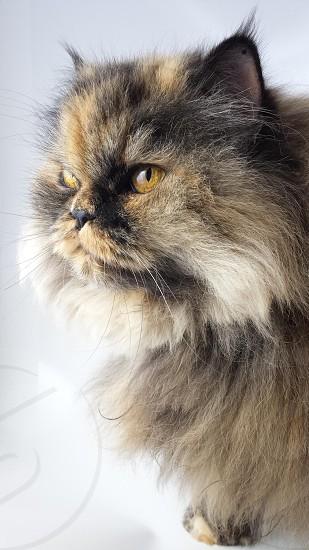 Look Cat photo