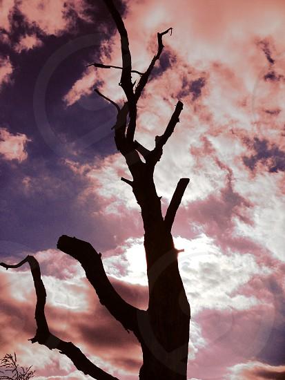 Abandoned dead tree haunting sky spooky photo