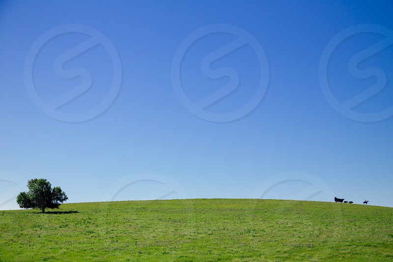 green grass field under blue sky at daytime photo