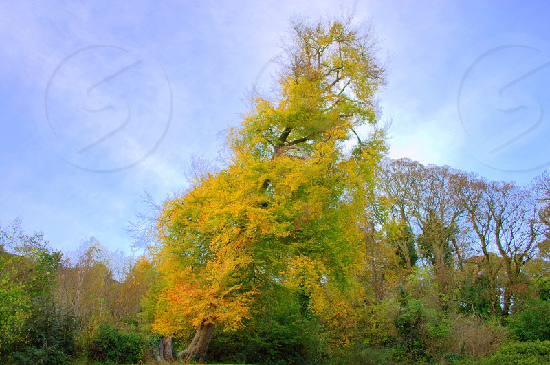 Autumn Tree Nature Change Colour Angle Natural photo