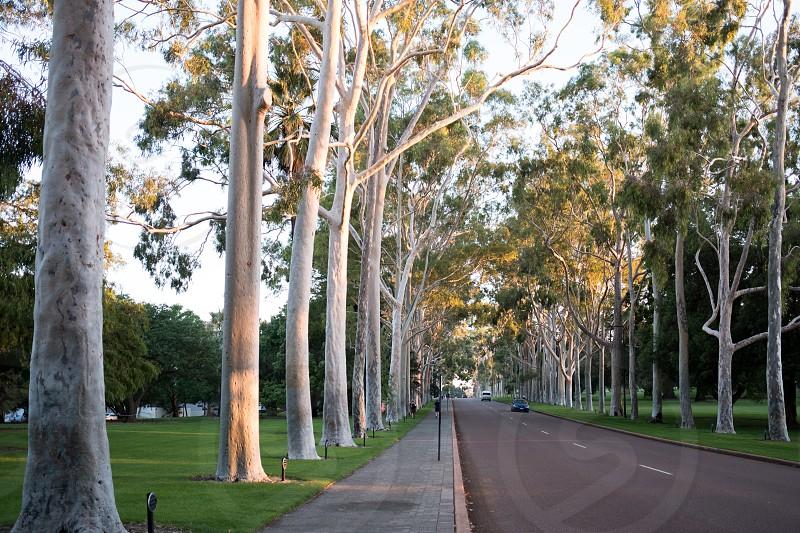 perth western australia at sunset kings park 2017 photo