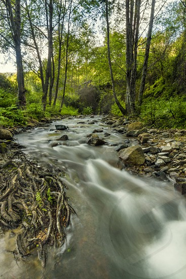 nature natural forest woods green fresh water stream river roots smooth tree dense beautiful beauty monchique portugal flora botany  photo