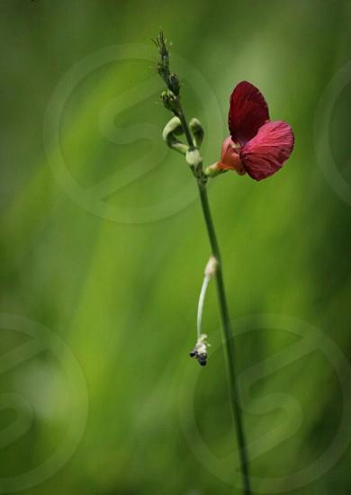 flower bud blooming photo