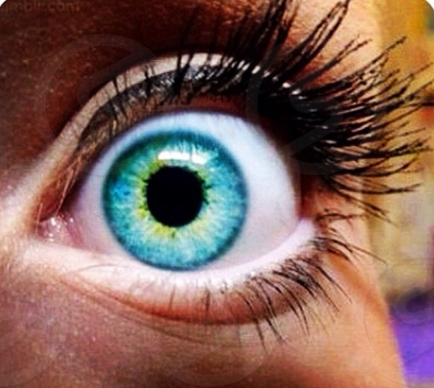 That big bright eye ... photo