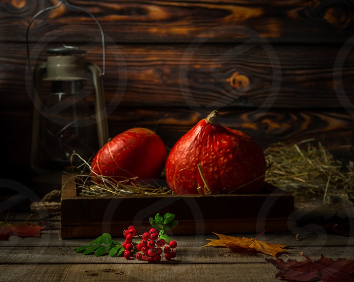 Still life with small autumn pumpkins in old wooden tray with straw old lantern and branch of rowan berries on wooden rustic background. photo
