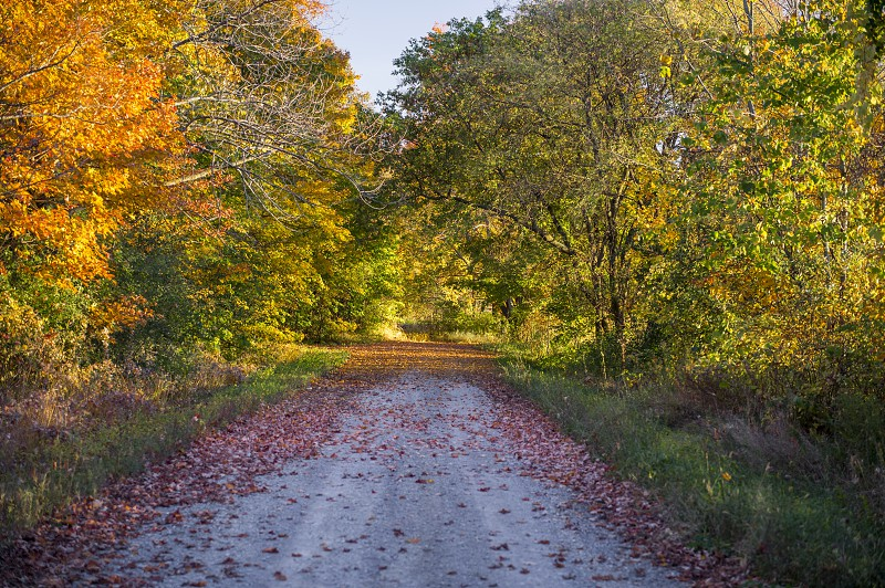 Open Country Road in Fall/Autumn photo
