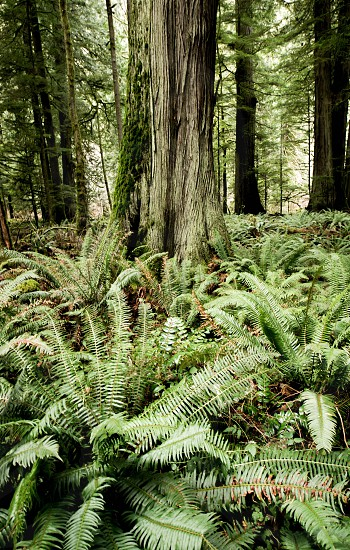 Pacific Northwest Forest photo