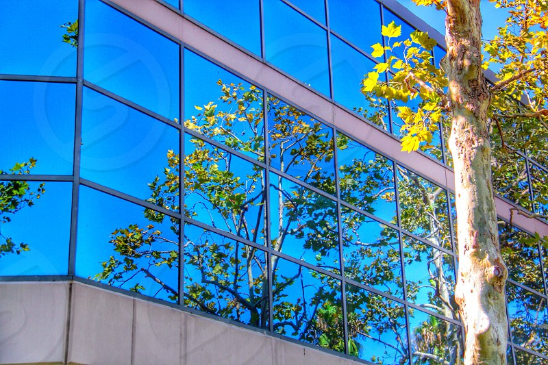 green tree reflection in office building glass windows photo