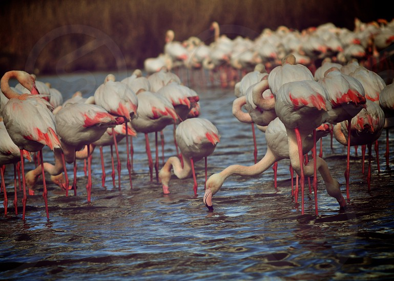 flamingo provence photo