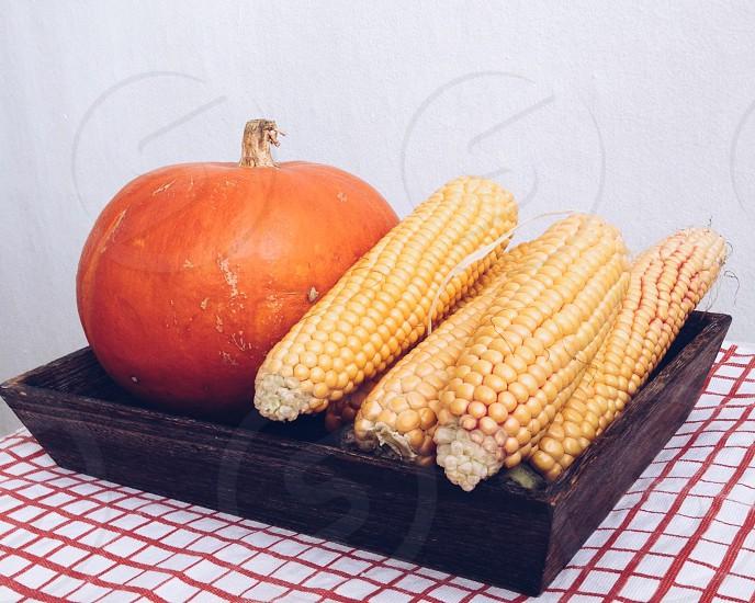 corns and pumpkin photo