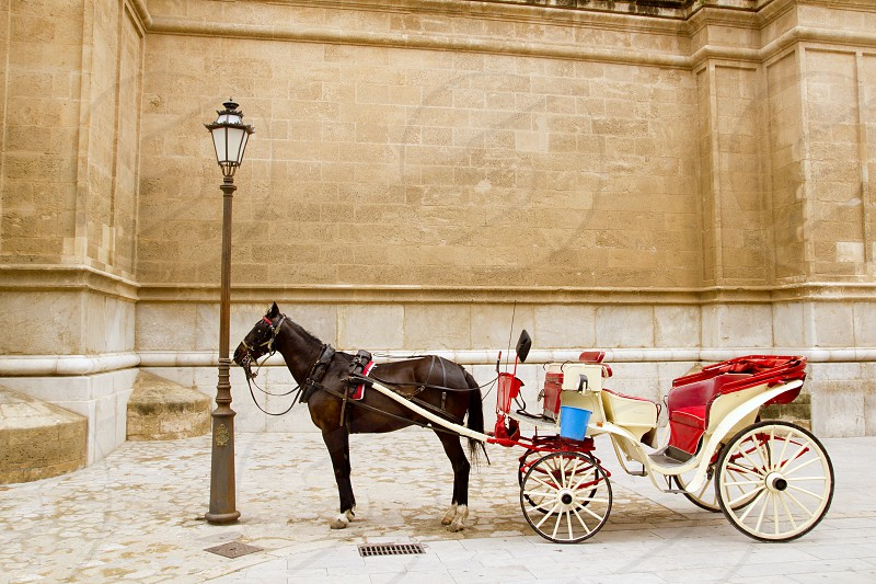 Carriage with horse in Majorca cathedral in Palma de Mallorca at Balearic islands photo