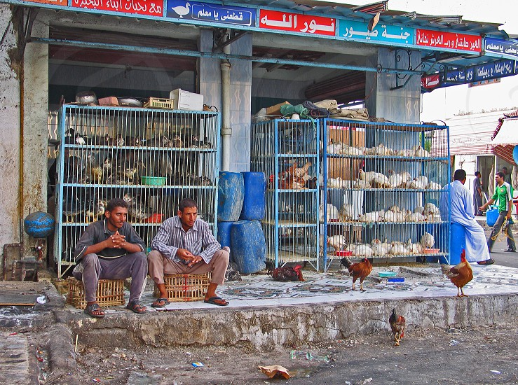 Egypt market photo