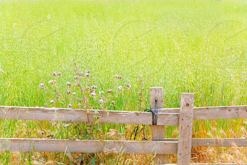 Balearic green meadow field in Formentera with wood traditional fence photo